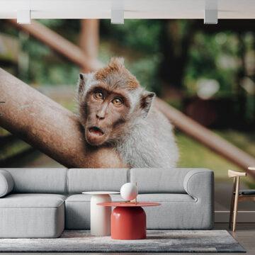 MultiTexPro - Monkey