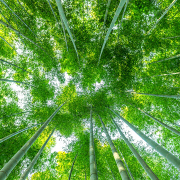 Akoestisch Plafondpanelen | Bamboe Bos