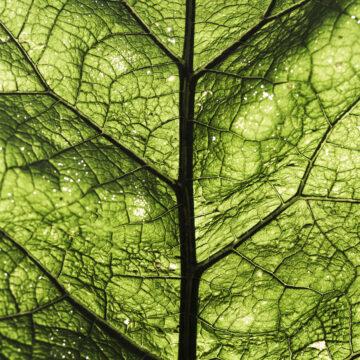 Akoestische Plafondpanelen | Groen Blad