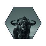 Hexagons Buffel