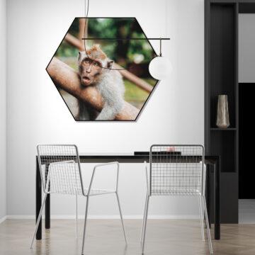 Akoestische Hexagon   Monkey