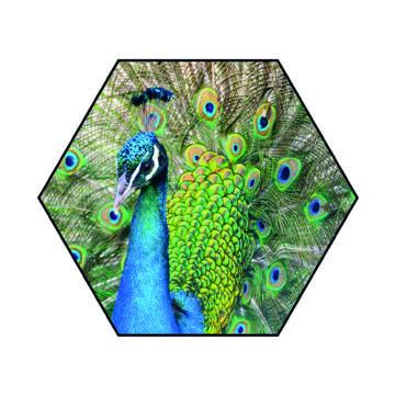 Hexagon   Pauw