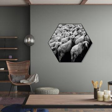 Akoestische Hexagon   Schapen