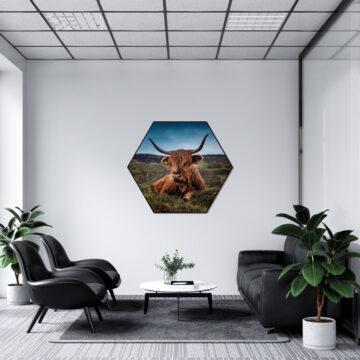 Akoestische Hexagon   Schotse hooglander liggend