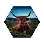 Akoestische Hexagon | Schotse hooglander liggend