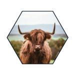Akoestische Hexagon   Schotse Hooglander