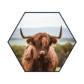 Akoestische Hexagon | Schotse Hooglander