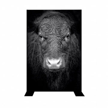Divider   Black and white cow