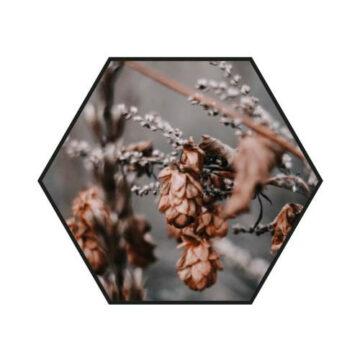 Hexagon   Old Flower