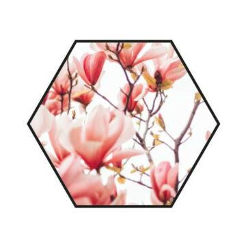 Hexagon   Pink Flower